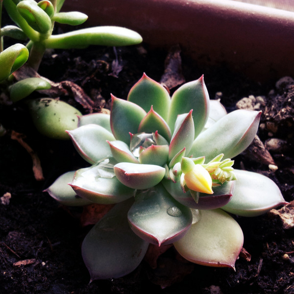 building earth succulant