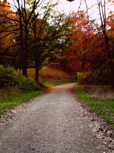 building earth autumn trees